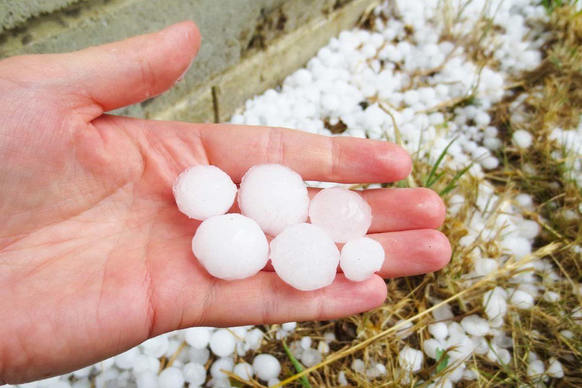 hail-on-palm